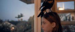 PENGUIN BLOOM (2021)Griffin Murray-Johnston as Noah Bloom. Cr: Joel Pratley/NETFLIX